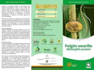Pulgon Amarillo2