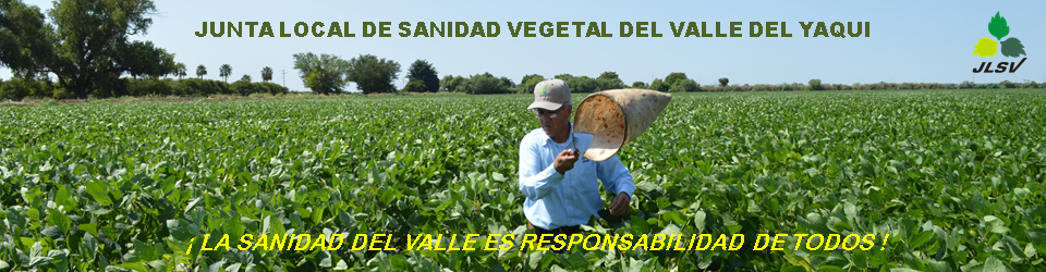 JUNTA LOCAL DE SANIDAD VEGETAL DEL VALLE DEL YAQUI