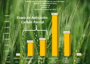 Carbon Parcial sem 11
